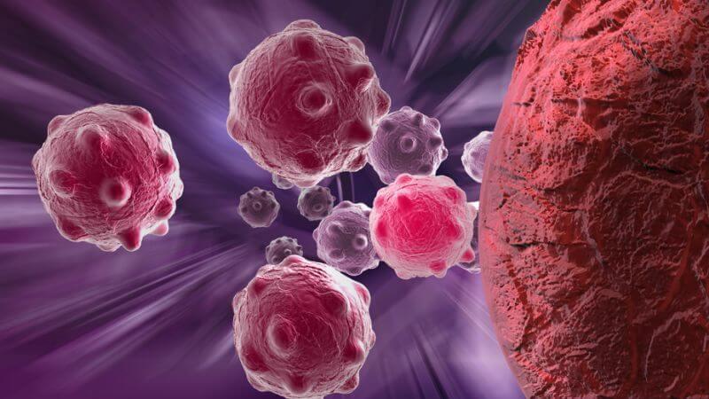 Anatomie und Funktion der Bauchspeicheldrüse