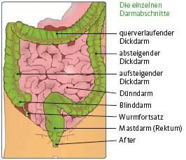 darm abschnitte